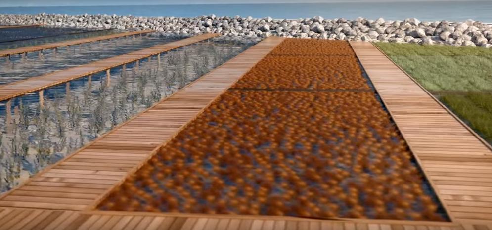 Mariculture in lagoon